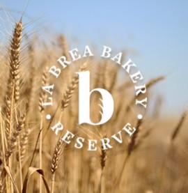 La Brea Branding & Web Design
